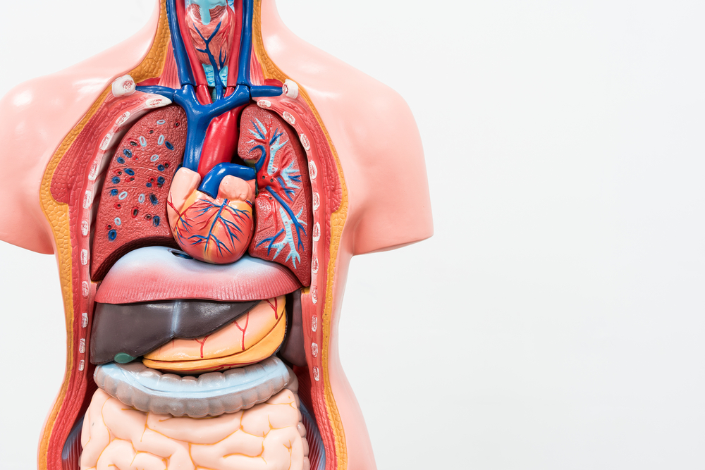 Is Appendix A Vestigial Organ Editage Insights