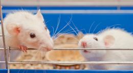 Nobel Laureates along with hundreds of U.S. researchers sign letter to defend animal research