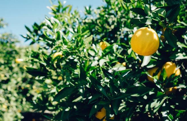 Academic lemons versus mental resilience