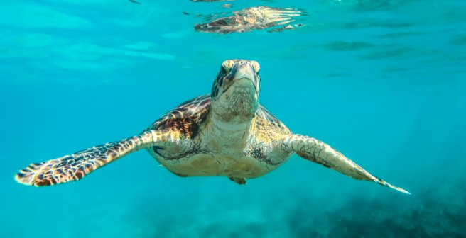 How I got a chance to save sea turtles with science