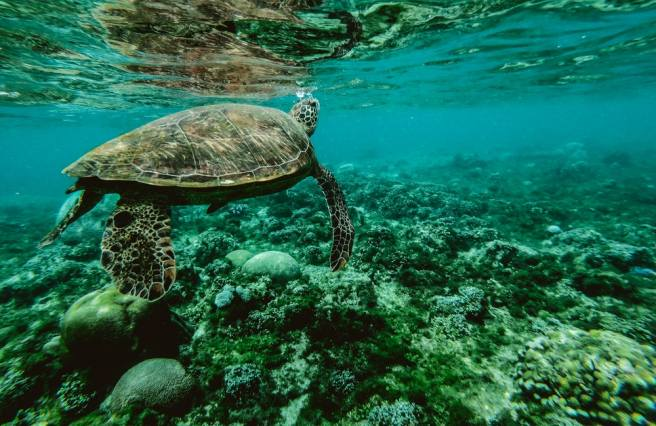 Humans and turtles share the same skin proteins that protect their skin