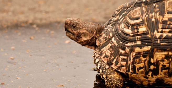 I completed my PhD very slowly - it was the effort of a tortoise