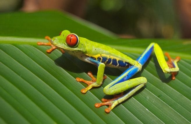 Japanese tree frogs' behavior inspires computational algorithms