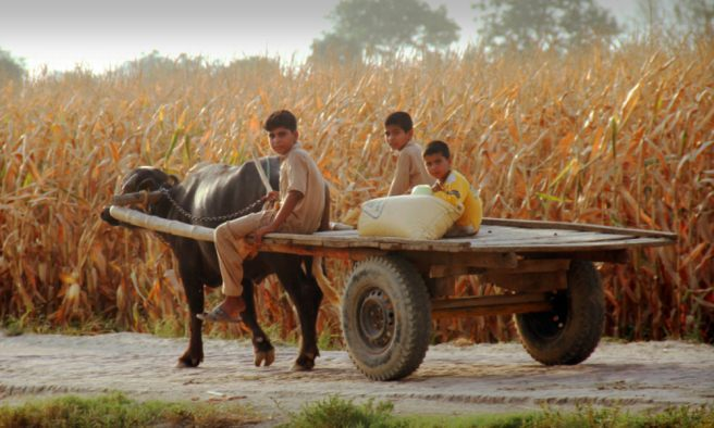 On fieldwork in rural Punjab: Do you see what I see?
