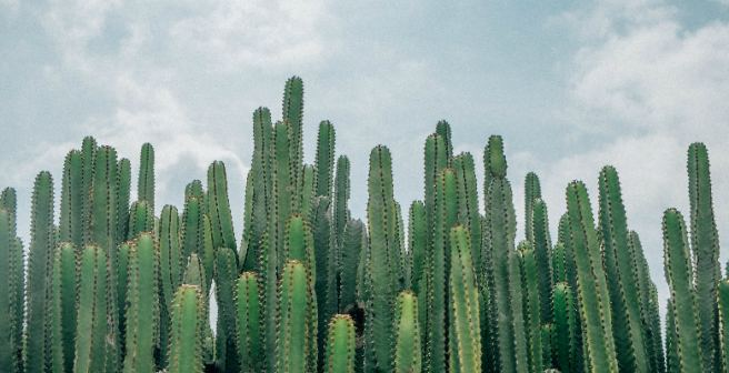 One-third of cactus species on the planet is vulnerable
