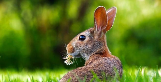Stem cell transplantation helps restore vision in rabbits