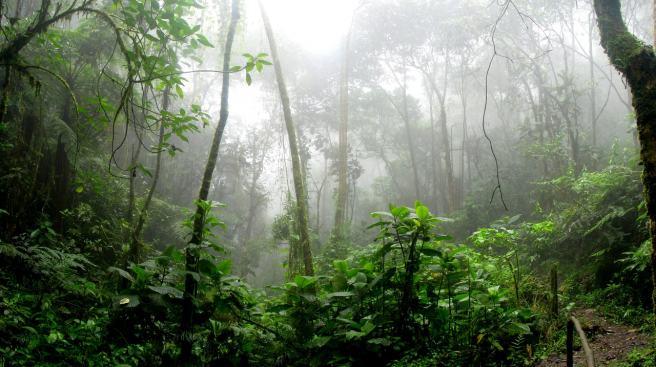 Trees in the Amazon make their own rain