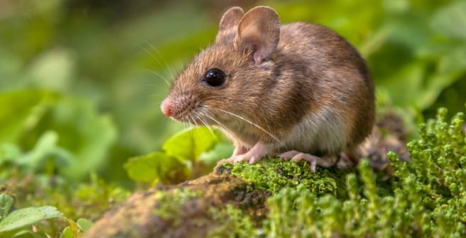 Unique Gene Therapy Found To Reverse Multiple Sclerosis In Mice