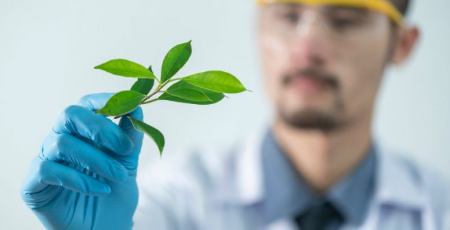 New study on recently discovered chlorophyll molecule could be key to better solar cells
