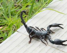 Arthropods - the new luxury good?