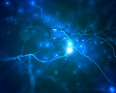 Researchers image complete nervous system in real time
