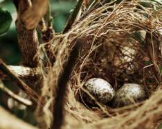 Eggs from smaller flocks of birds more likely to carry Salmonella enteritidis