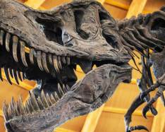 Jurassic Park a lie; T. rex couldn't run says latest research