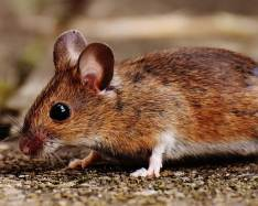 Small region in mouse brain triggering smell-induced reaction identified