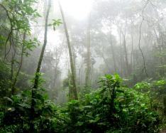 Trees in the Amazon make their own rain