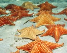 For more than a year, an epidemic called Sea Star Wasting Disease (SSWD) has killed thousands of Northeast Pacific Coast sea stars.